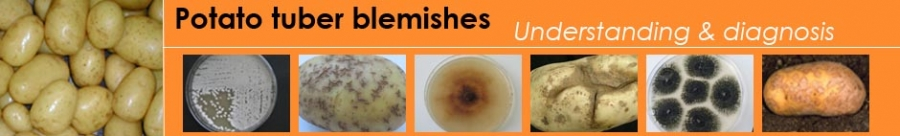 Welcome site Potato tuber blemishes