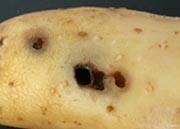 Slug holes