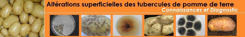 Bienvenue sur le site Altérations superficielles des tubercules de pomme de terre
